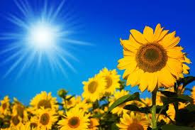 Jutro svježe, tokom dana sunčano