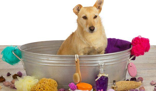 Da li pas sme da se kupa šamponom koji je namenjen za ljudsku upotrebu?