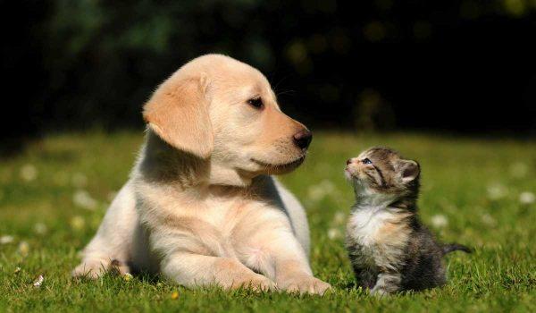 Mačka ili pas, ko je privrženiji ljubimac