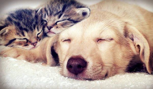 Psi i mačke ne prenose virus niti obolijevaju od njega